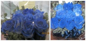 blue-bara